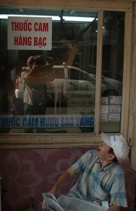 A Small Deer in a Hanoi Window