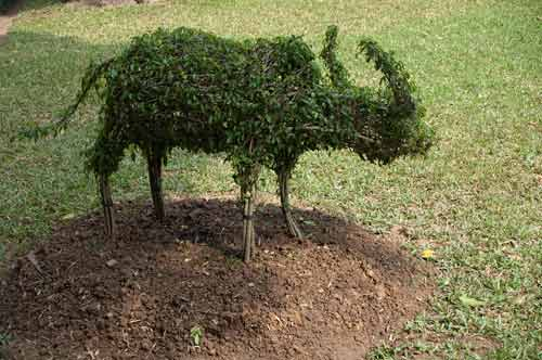 water buffalo topiary, Temple of Literature, Hanoi, Vietnam