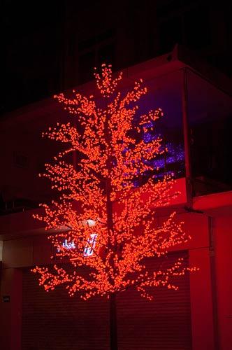Christmas trees, Hanoi, Vietnam