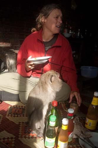 breakfast with the monkey, pagoda, Bokor Hill Station, Cambodia