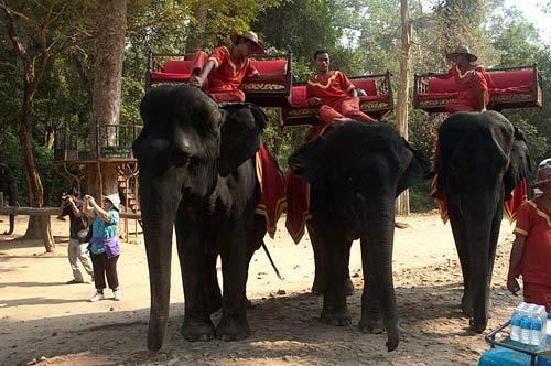 elephants, Angkor Thom, Cambodia