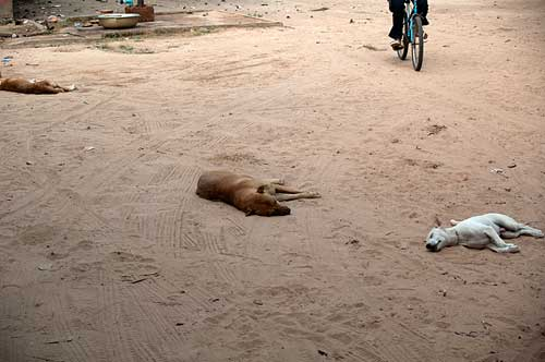 sleeping dogs, Siem Reap, Cambodia