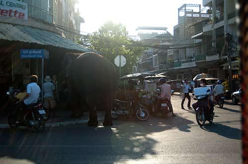 elephant on street, Phnom Penh, Cambodia