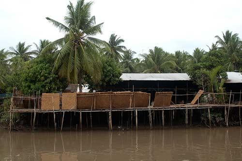 coconut processing, Ben Tre, Vietnam
