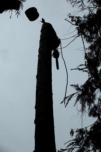Grant Hobbs up a tree