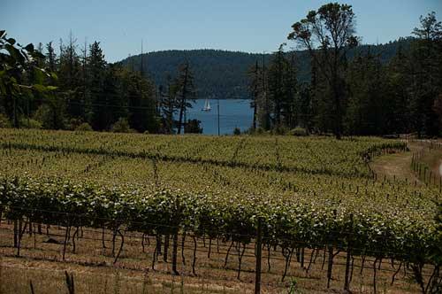 Saturna Winery, Saturna Island, BC