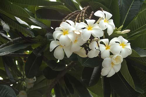 flowers, Vung Tau, Vietnam
