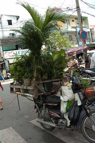 plants on motorcycle, Saigon, Vietnam