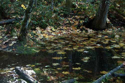 Beaver Pond at Roe Lake, Pender Island, BC