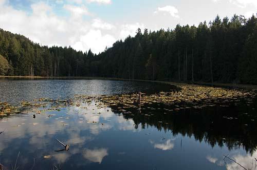Around Roe Lake Pender Island