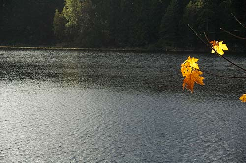 Fall leaves at Roe Lake, Pender Island, BC