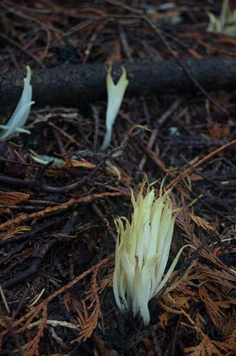 funghi near Roe Lake, Pender Island, BC