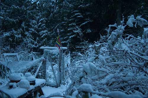 our garden in the snow, Pender Island, BC