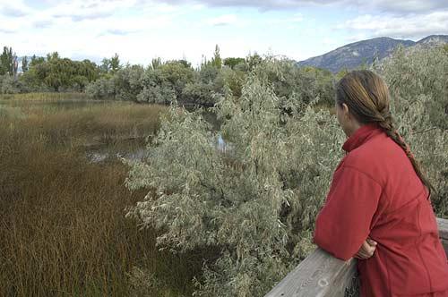 Haynes Point marshland walk viewpoint