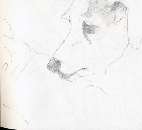 sketch of dog