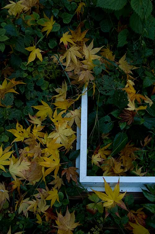 leaves and window, Pender Island