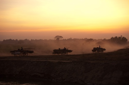 water buffalo carts heading home at sunset, Myanmar