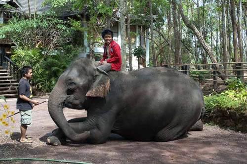 elephant and mahout at Tadlo Lodge, Laos