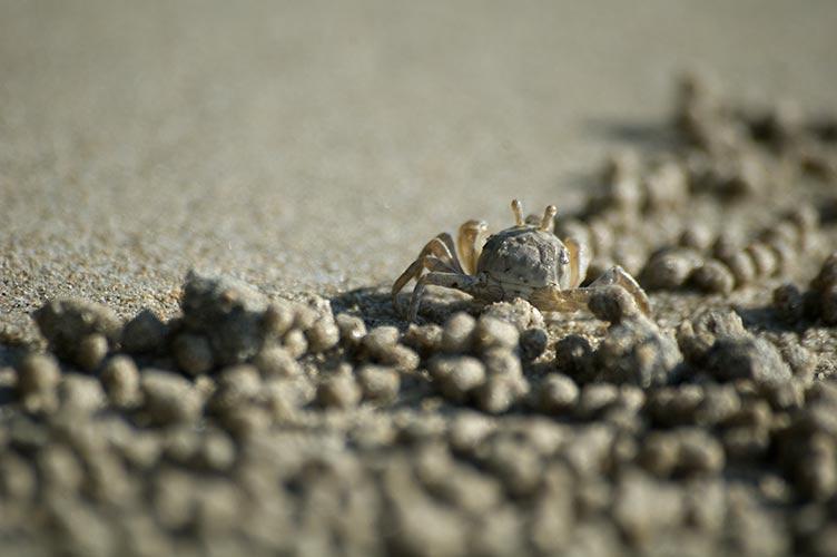 crab, Khong Prao, Koh Chang, Thailand