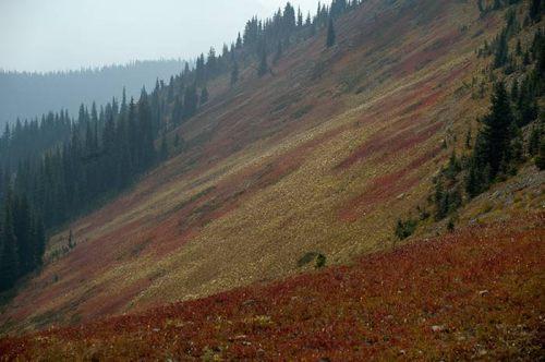 sub alpine meadows, Heather Trail, Manning Park