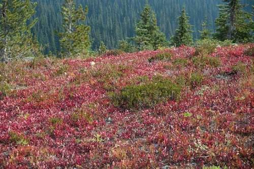 sub alpine meadows Manning Park, British Columbia, Canada