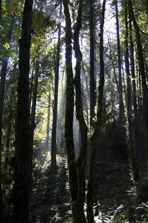 Wildwood Trail, Forest Park, Portland, Oregon