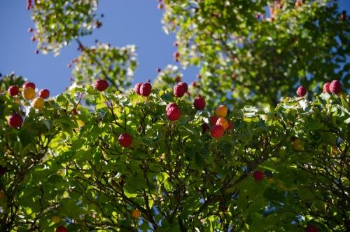 Hoyt Arboretum, Portland, Oregon