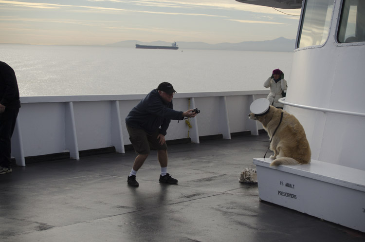 man shoots dog on MV Coho, Black Ball Ferry