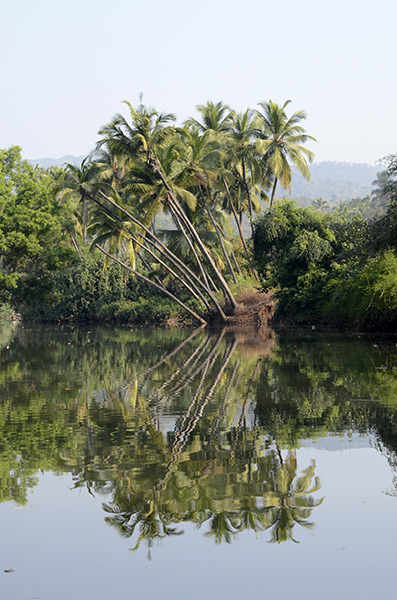 agonda-river-reflection