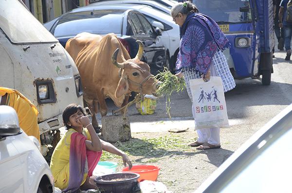 street-cow
