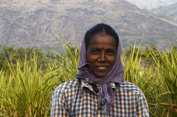 chinnar-sugarcane-worker
