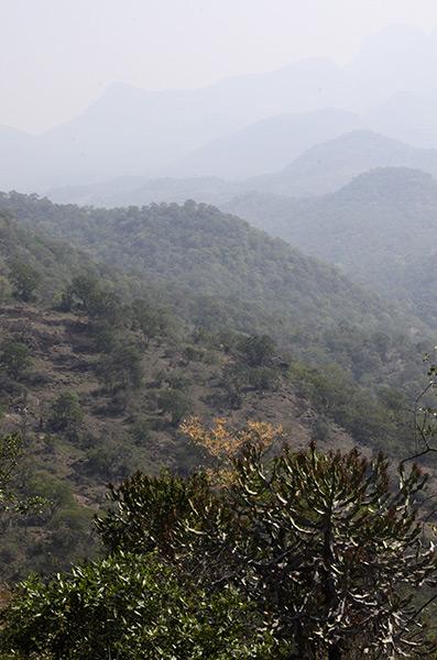 chinnar-view