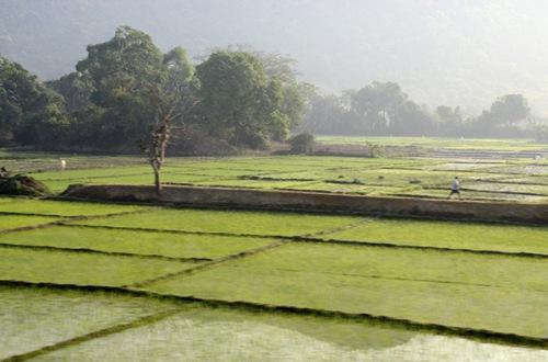 kannur-train-rice