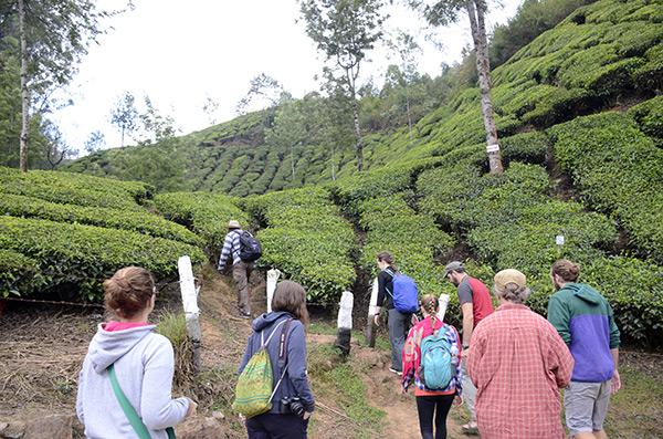 munnar-tea-trek