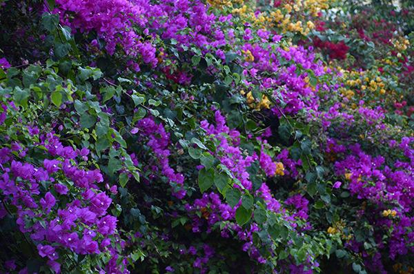 pondy-flowers