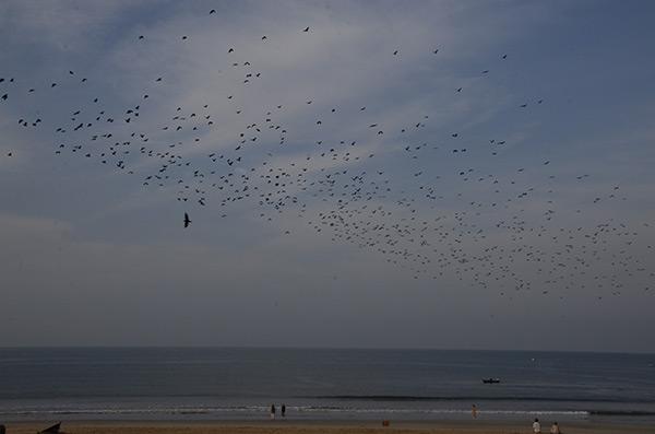 agonda-bats