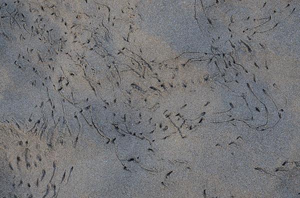 agonda-bird-tracks