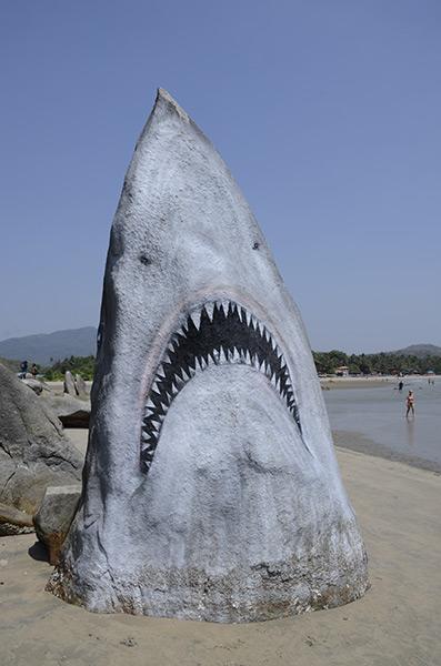 agonda-pal-shark