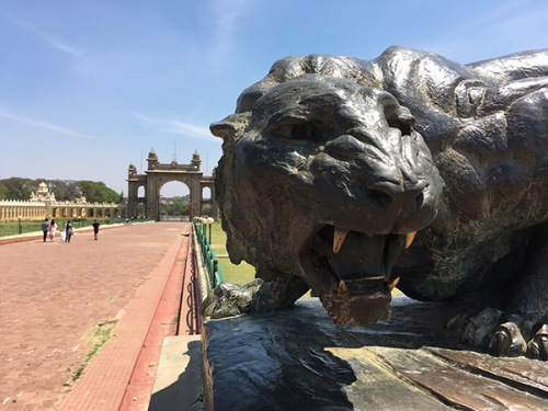 mysore-palace-cat