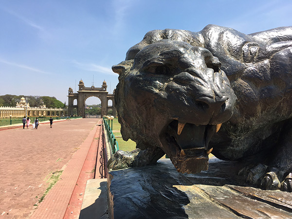 mysore-palace-cat