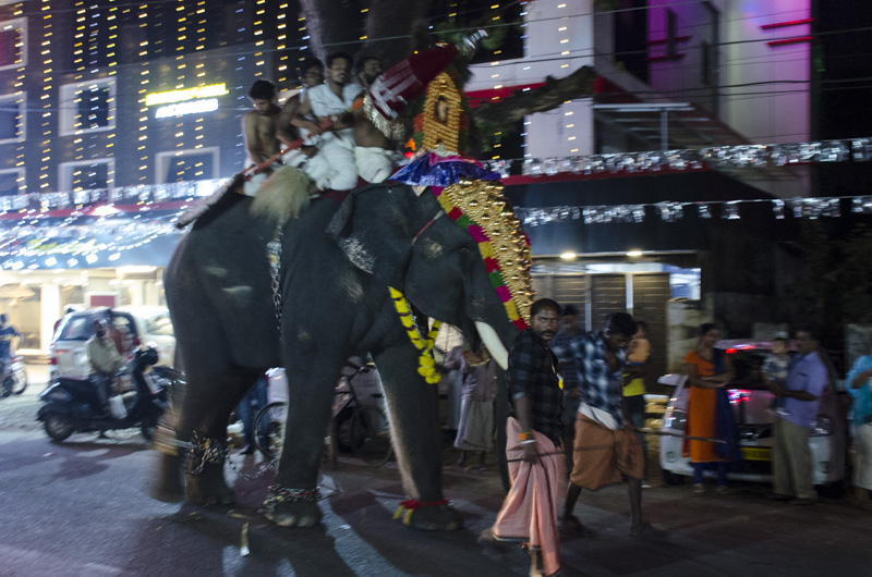 elephant in Hindu festival procession, Kochi, India