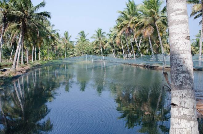 fish farm on Munroe Island, Kerala, India
