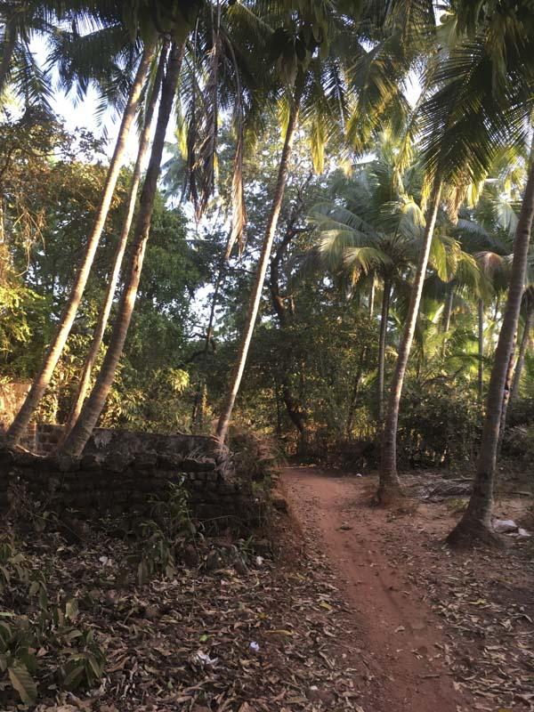 Path to the Road to Agonda Beach