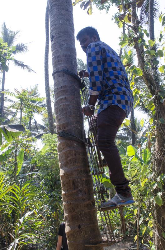 Innovative Palm Climbing Device at the Green Park Spice Plantation, Kumily, India
