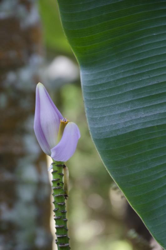 flower at the Green Park Spice Plantation, Kumily, India