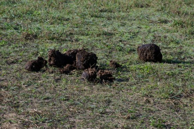 elephant dung, Periyar Wildlife Sanctuary, India