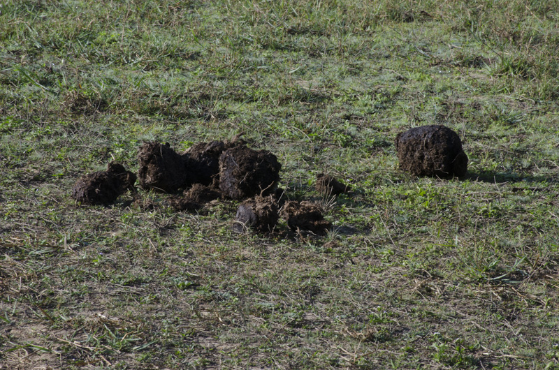 elephant dung, Periyar Wildlife Sanctuary, India