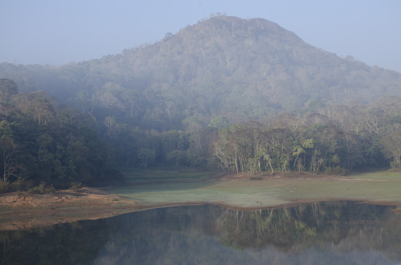morning mist at Periyar Wildlife Sanctuary, India