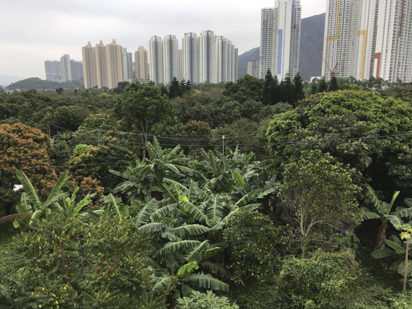 View from Balcony at City Oasis Guesthouse, Hong Kong